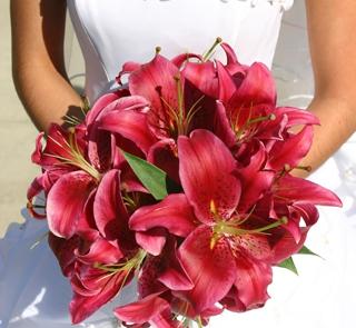 Purpurowe lilie
