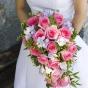 Klasyczne różowe róże w kaskadzie