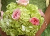 Hortensje - bukiety i dekoracje