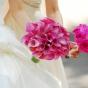 Róże w kolorze różowym kontra różowe kantadeski